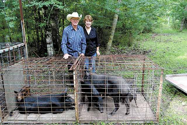 Bill Massey and Sandy Hargrove stand behind a cage with seven wild hogs trapped inside the Woodville City Limit.